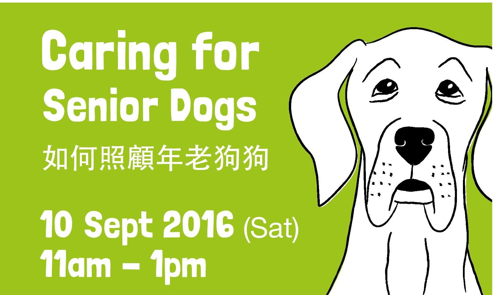 Senior Dogs square
